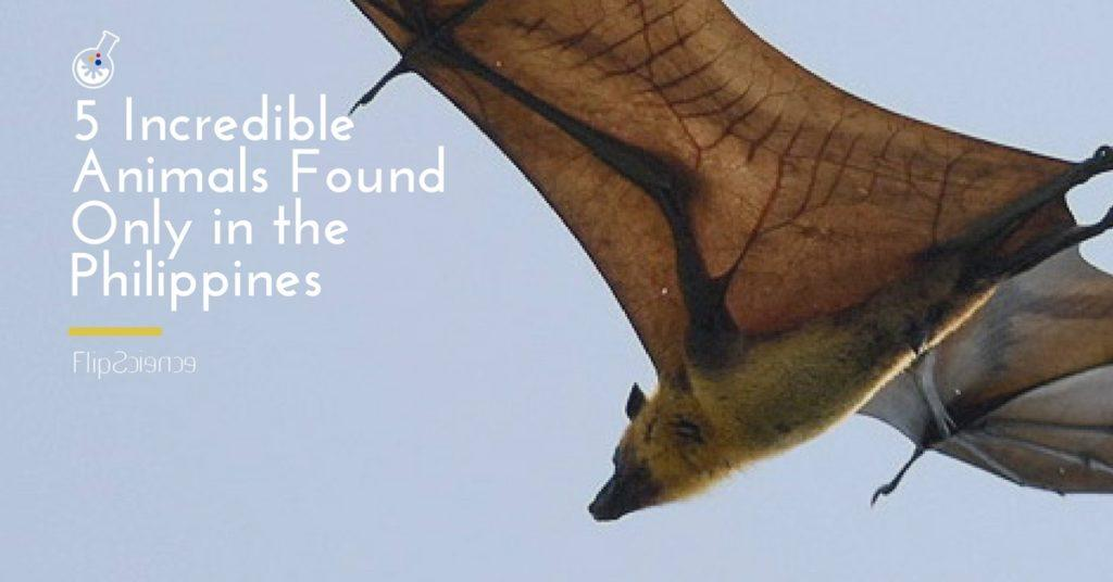 incredible animals in the philippines