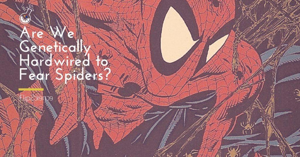 spider, fear, arachnophobia