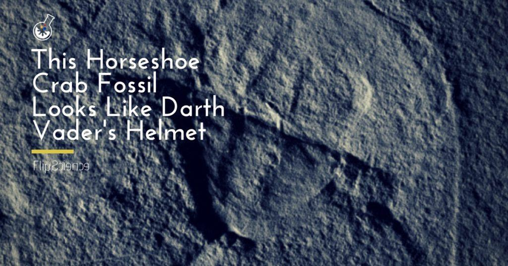 darth vader, star wars, fossil, horseshoe crab, vaderlimulus