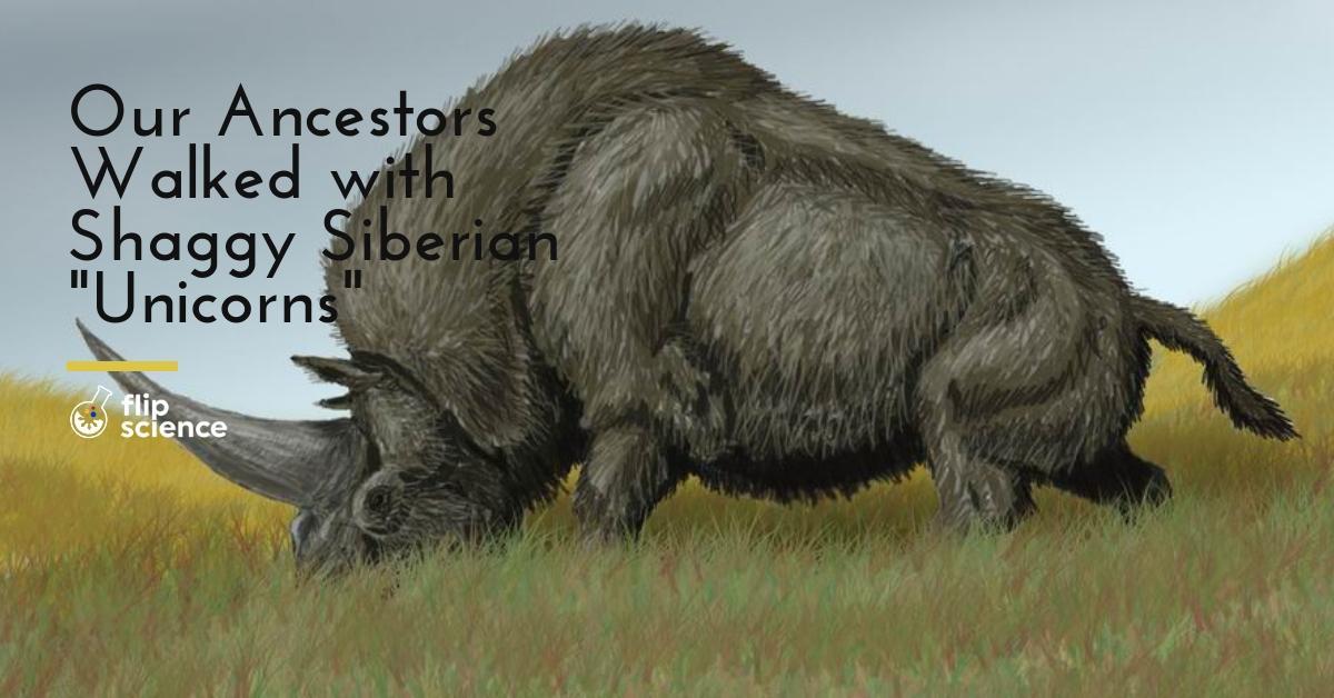 Elasmotherium sibiricum, unicorn, siberian unicorn