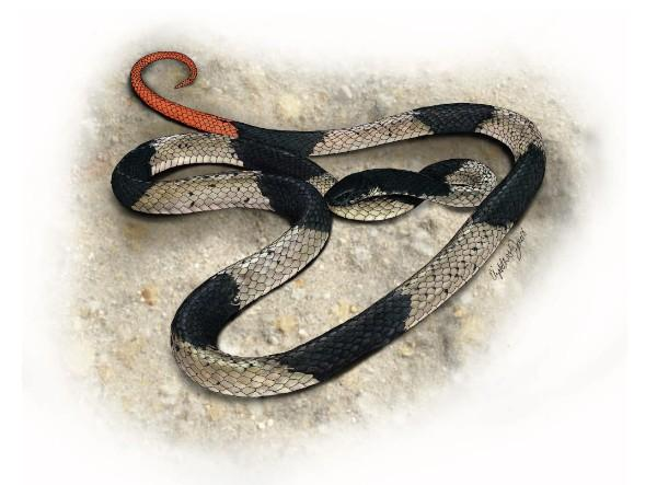 snake, philippines