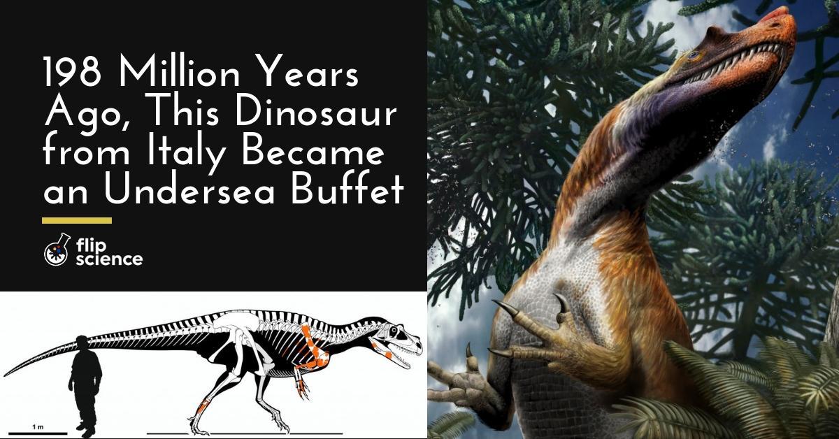Saltriovenator zanellai, Jurassic, Saltriovenator