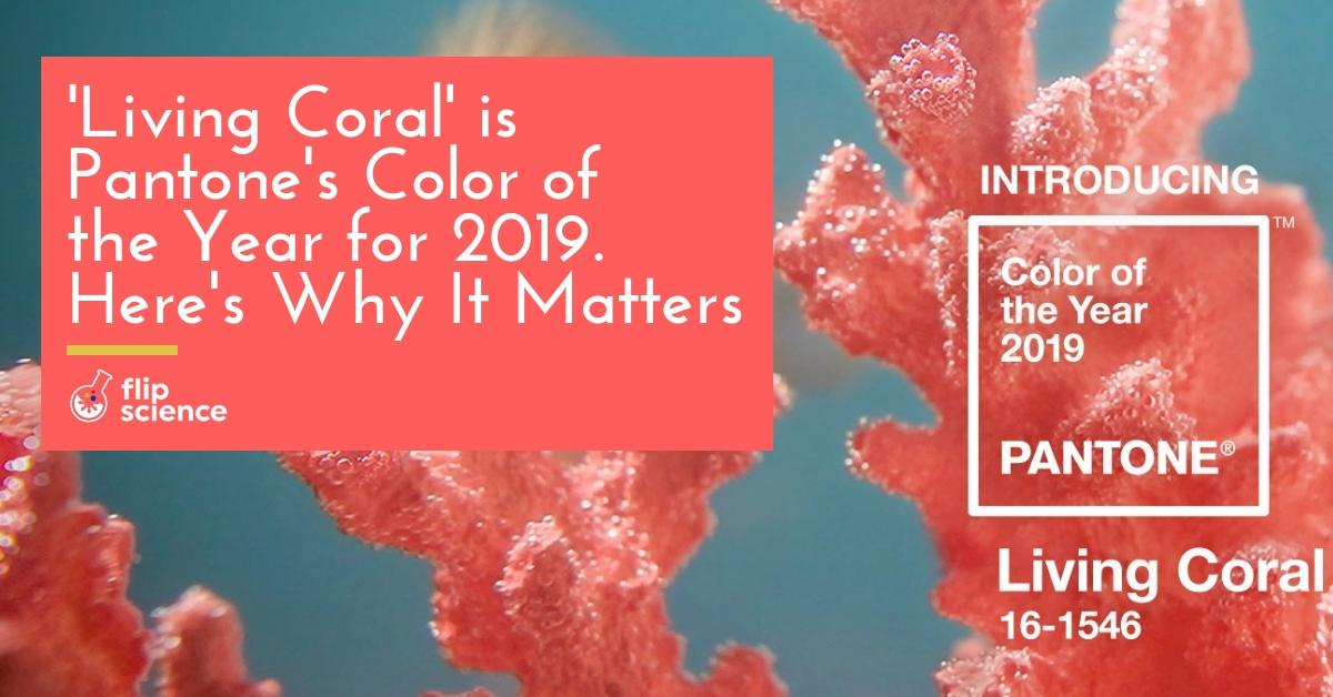 Living Coral Is Pantone S Color Of The Year For 2019 Here S Why It
