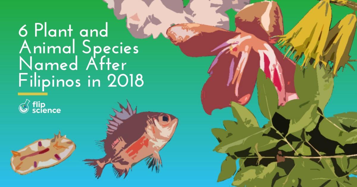 filipino, species, 2018