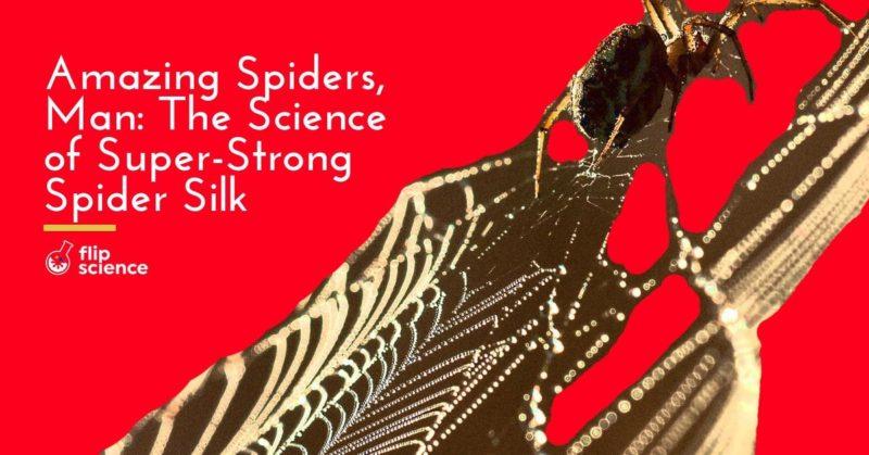 spider, silk, web