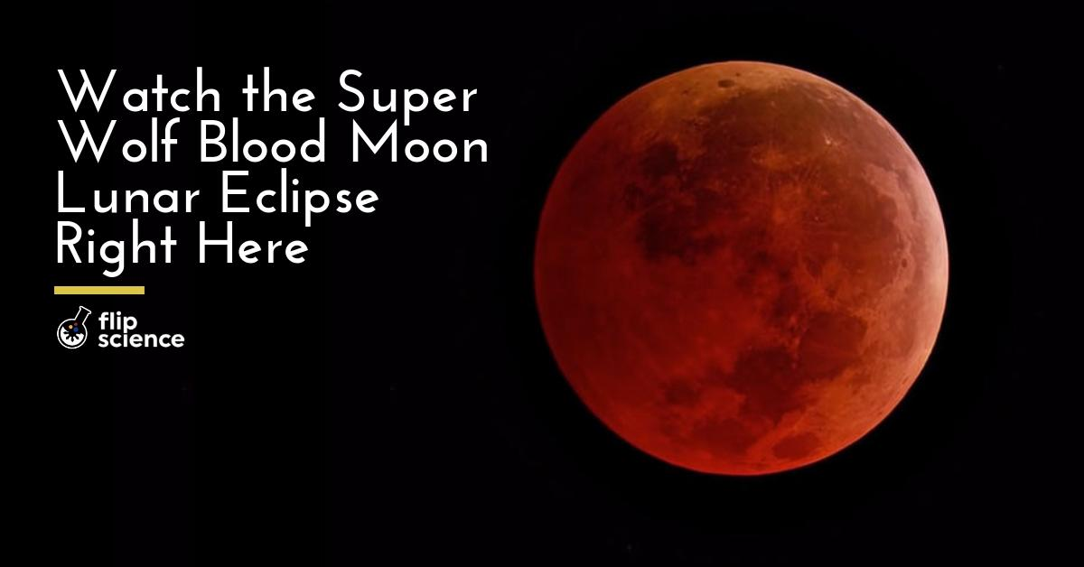 Watch the Super Wolf Blood Moon lunar eclipse right here