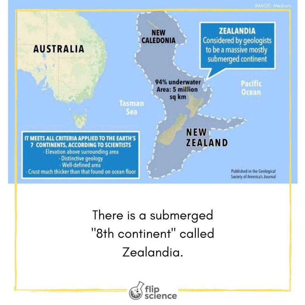 zealandia, continent, flipfacts, flipfact, flipscience