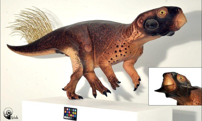 psittacosaurus, dinosaur, dinosaurs