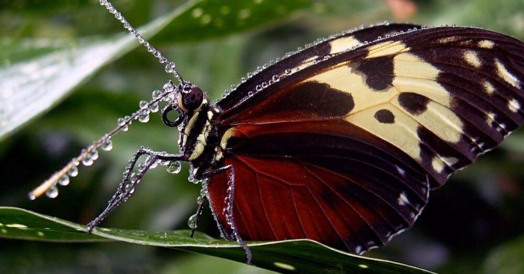 butterflies, flipfact, flipfacts, flipscience