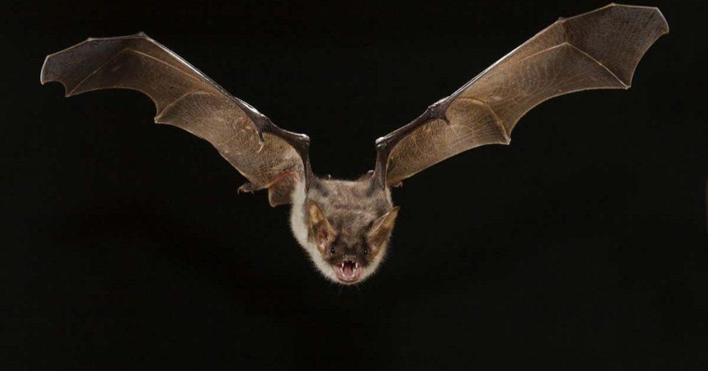 bats, flipfact, flipfacts, flipscience