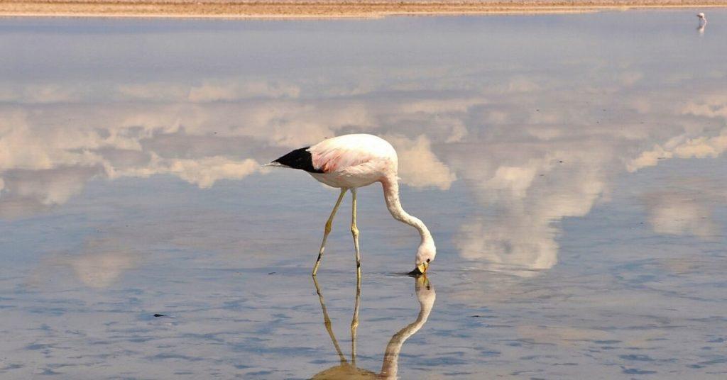 flamingo, flamingos, flipfact, flipfacts, flipscience