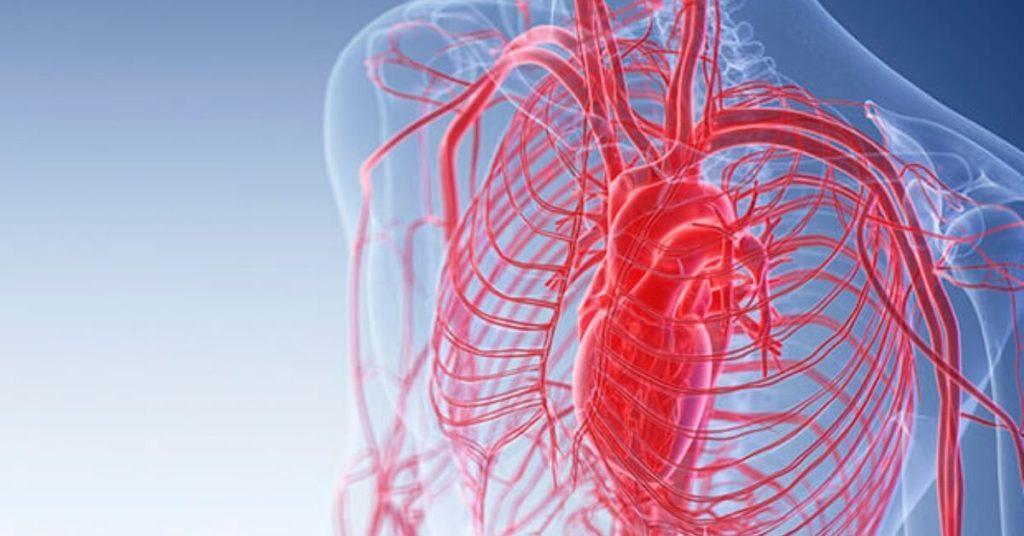 blood vessels, mercury, flipfact, flipfacts, flipscience