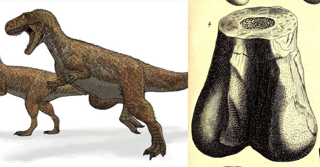 megalosaurus. scrotum humanum, flipfact, flipfacts, flipscience