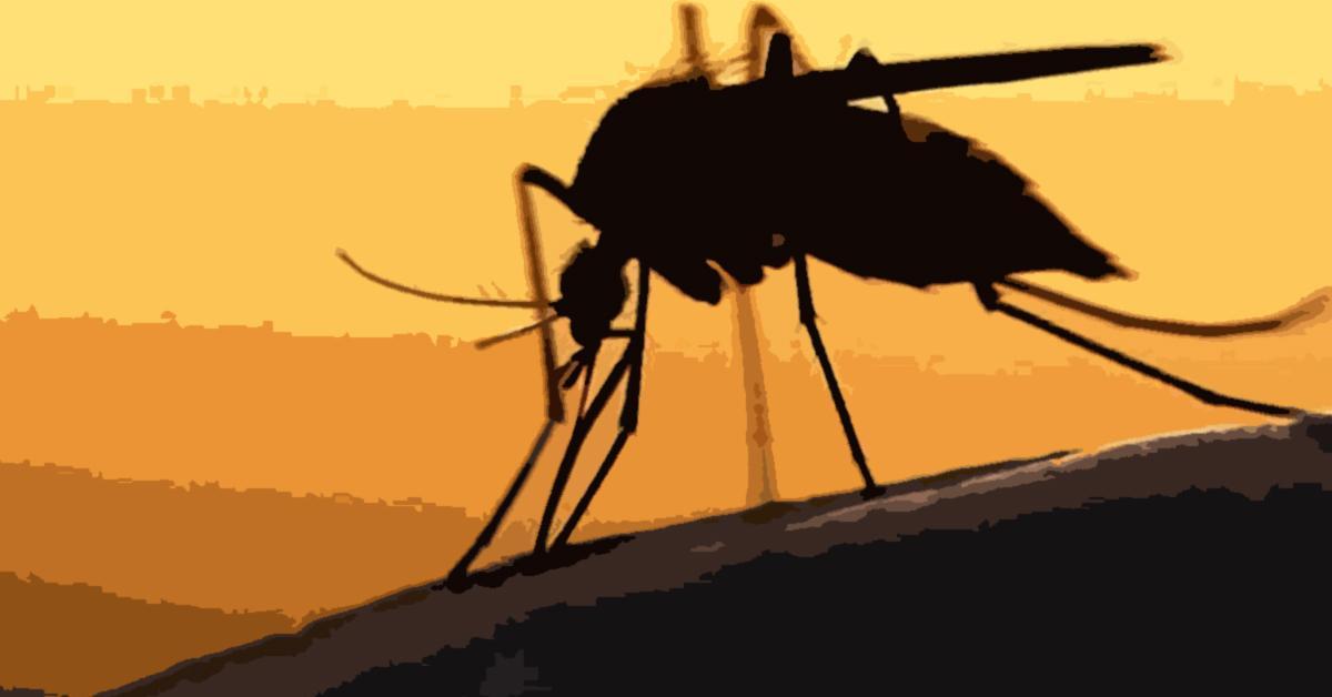 dengue, epidemic