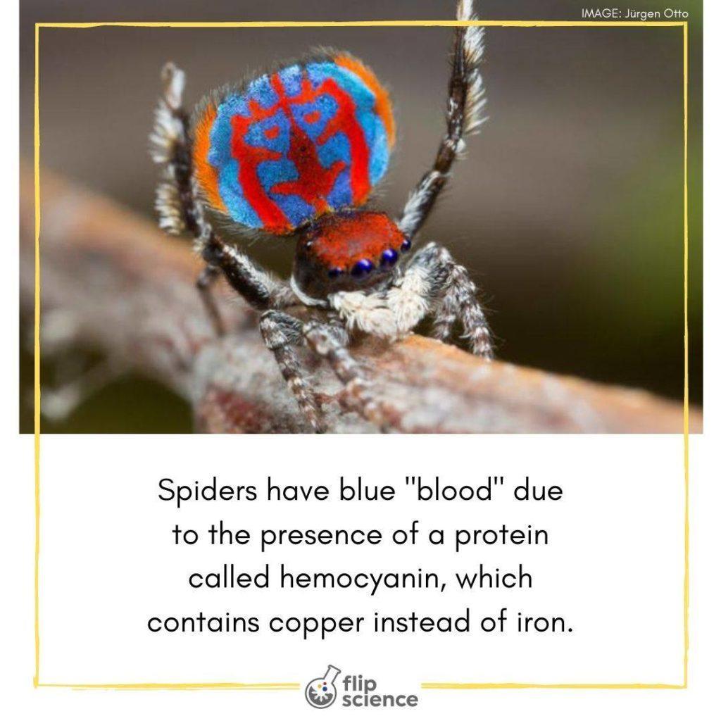 spiders, flipfact, flipfacts, flipscience