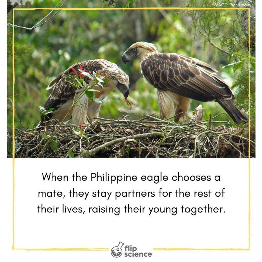 flipfact, flipfacts, flipscience, philippine eagle