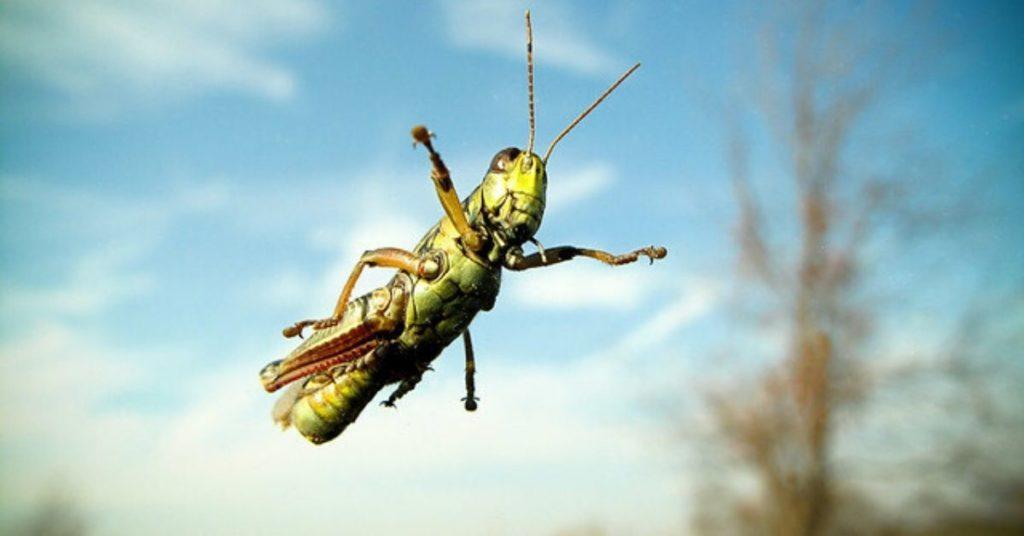 flipfact, flipfacts, flipscience, grasshopper