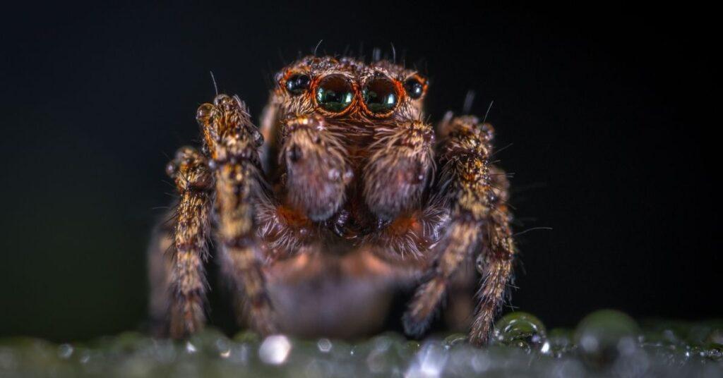 spider, spiders