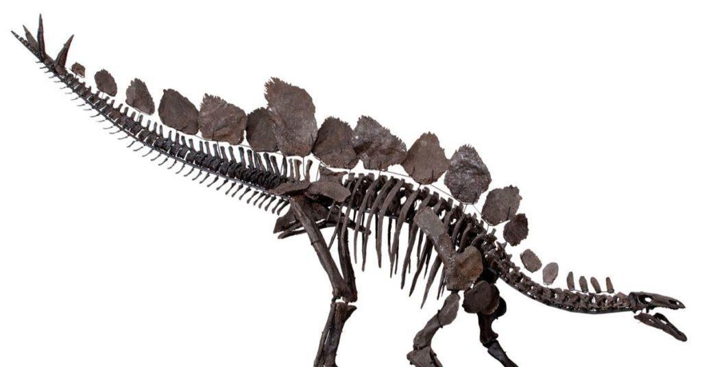 thagomizer, flipfact, flipfacts, flipscience, stegosaurus