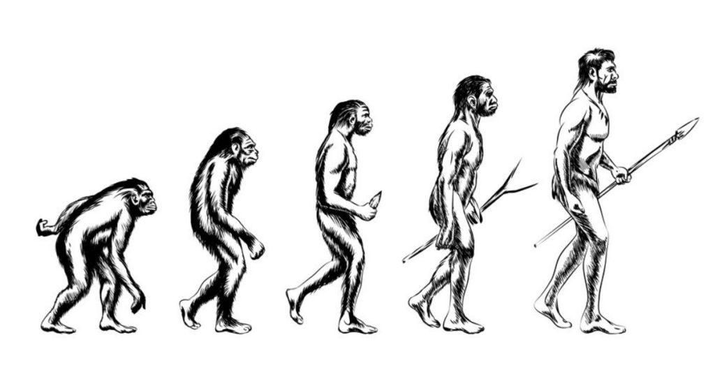 human, humans, apes, evolve, evolution, flipfact, flipfacts, flipscience