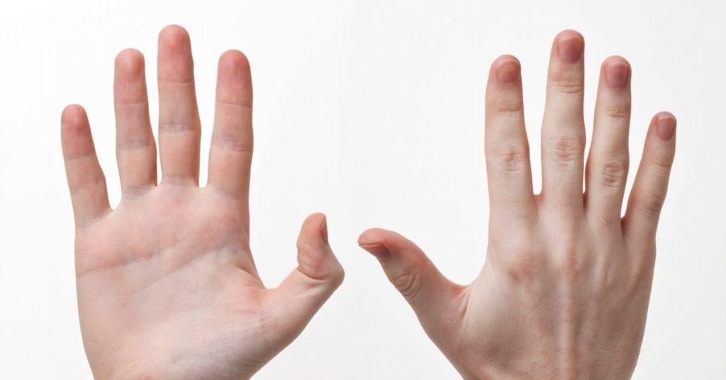 fingers, flipfact, flipfacts, flipscience, muscles
