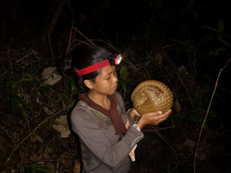 pangolin, philippine pangolin, balintong, usaid