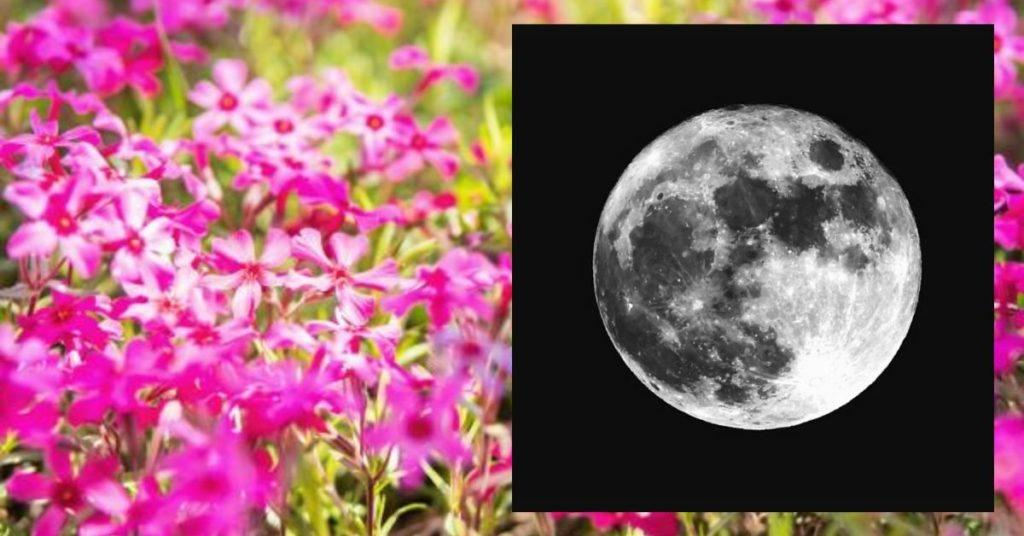 flipfact, flipfacts, flipscience, pink moon