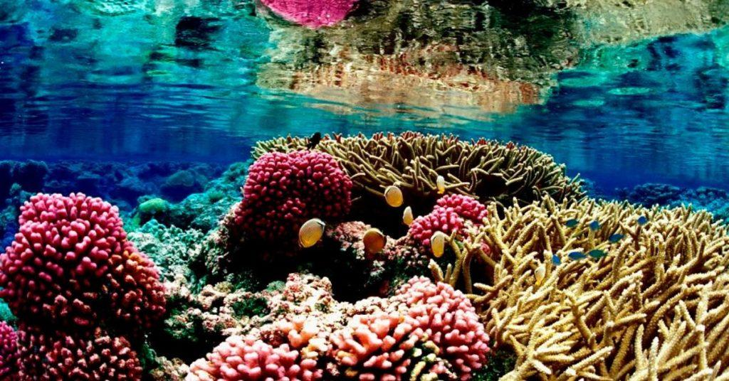 flipfact, flipfacts, flipscience, coral reef, coral