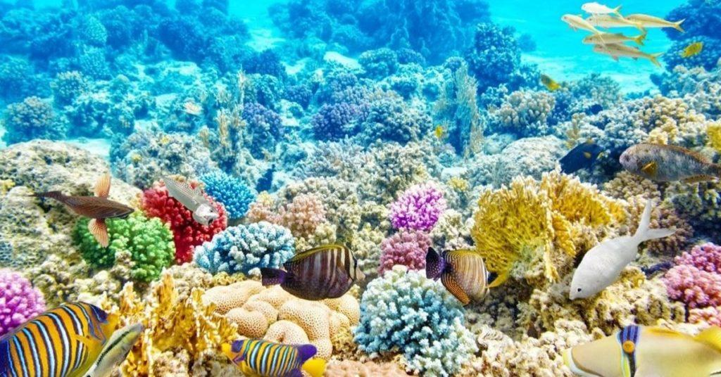 flipfact, flipfacts, flipscience, coral, coral reef, corals, coral reefs