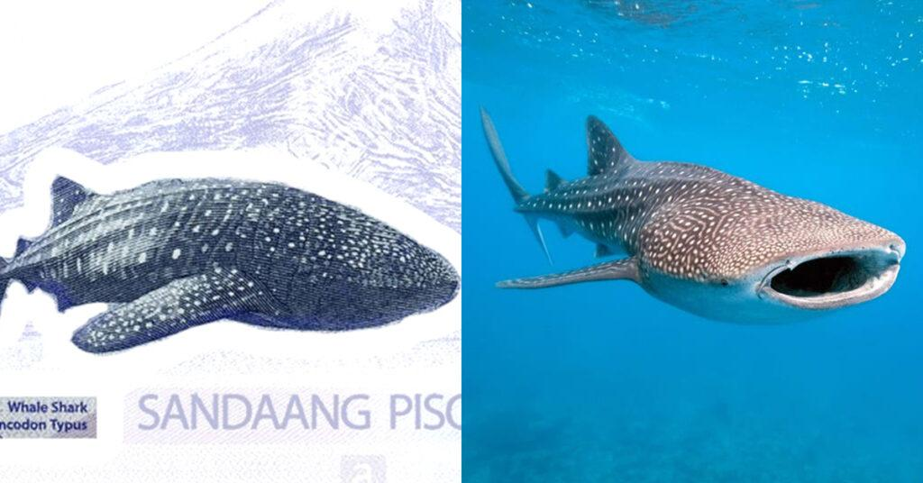 philippines, peso, bills, banknotes, currency, whale shark