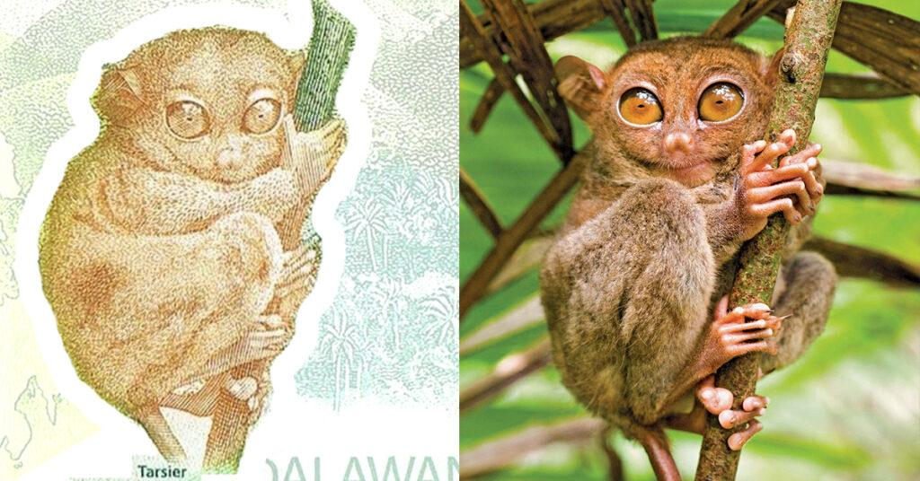 philippines, peso, bills, banknotes, currency, tarsier