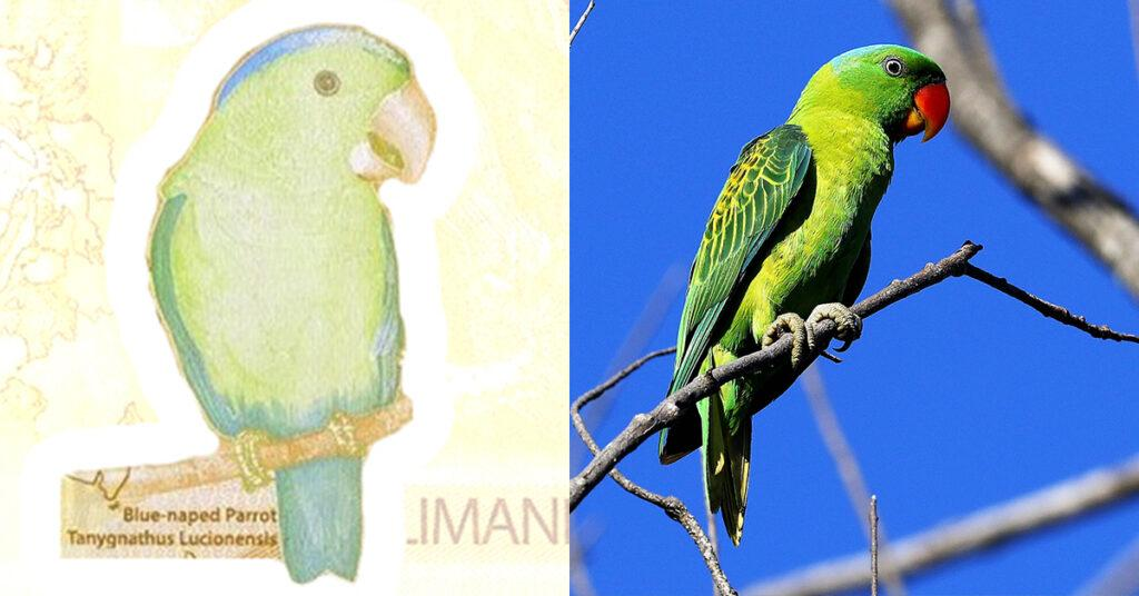 philippines, peso, bills, banknotes, currency, blue-naped parrot