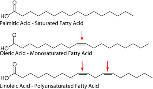 saturated fatty acids, unsaturated fatty acids, polyunsaturated, monounsaturated