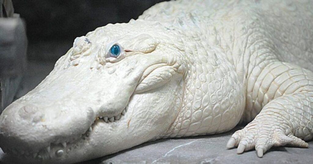 flipfact, flipfacts, flipscience, leucism, leucistic, albinism, albino