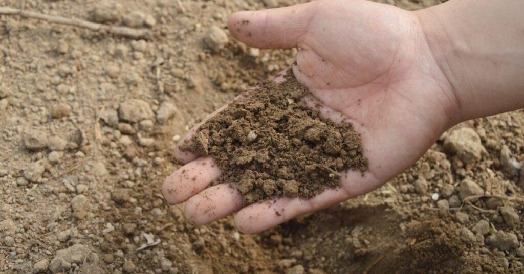 flipfact, flipfacts, flipscience, soil, world soil day